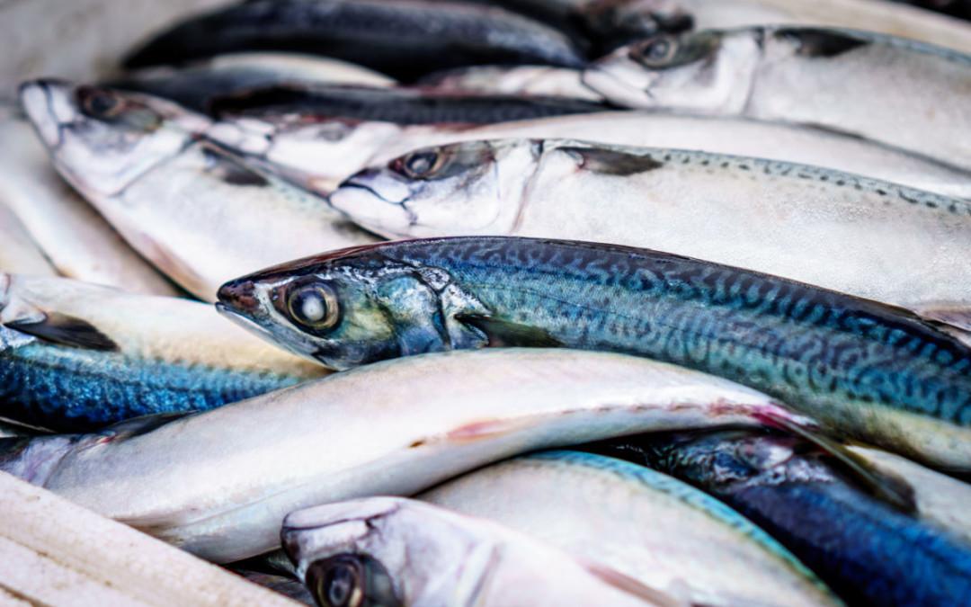 Pesca da sardinha proibida até ao final de abril