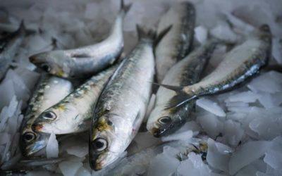 Pesca da sardinha proibida a partir deste sábado
